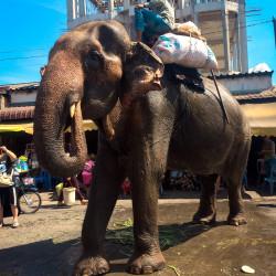 Slon v tržnici