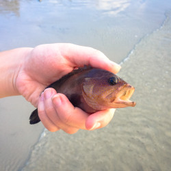 Zachraňování ryby na Štědrý den